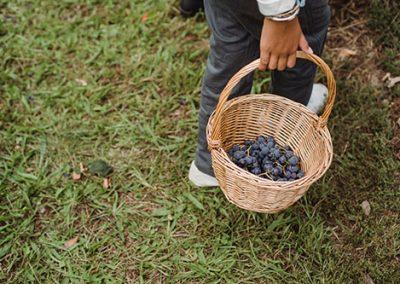 Gyümölcstermesztési gyakornok